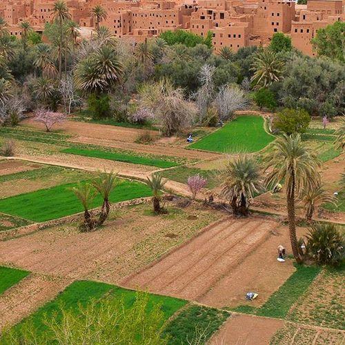 Life in oasis fields. Simplepeople People Peace Berbervillage
