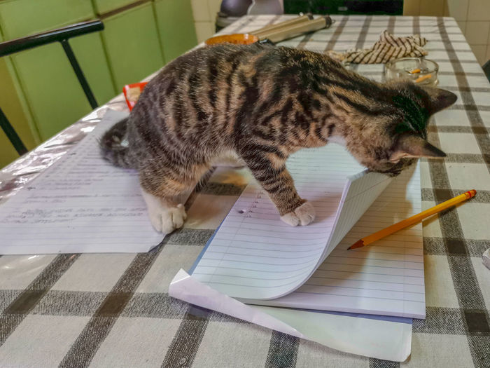 Cat toying with a book. Cute Book Friendship Playful Friendship Colors Day Curiosity Adorable Room Mammal One Animal Portrait Side View Indoors  Looking Striped Little Funny Fur Table Pencil Young Animal Hair Pets Animal Themes Domestic Cat Cat Whisker Kitten