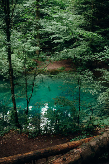 Ochiul Beiului Forest Lake Blue Lake Blue Water Green Nature Transylvania Pele Photography Hikingadventures Summer Trip Tree Water