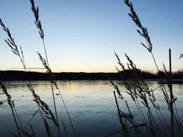 Behind the straws. Straws Lake River Riverside Riverbank River View Frosty Sunset Bank Check This Out