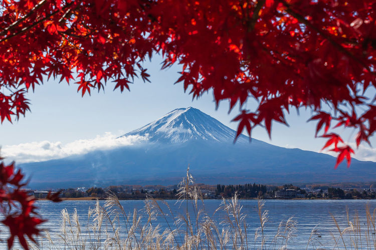 Autumn Fujisan Japan Landscape_Collection Nature Red Travel Beauty In Nature Cold Temperature Day Leaf Mountain Mountain Peak No People Outdoors Plant Snowcapped Mountain Travel Destinations Tree Water