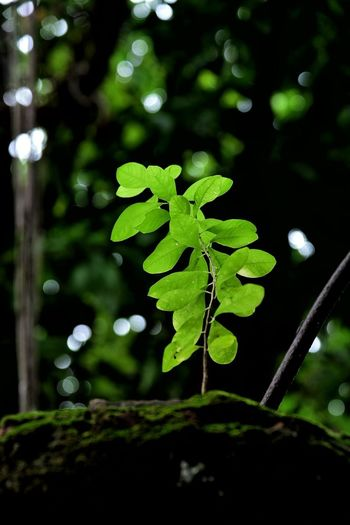 Green Color Social Issues Plant Leaf Nature Close-up No People Outdoors Tree Vine - Plant Day Beauty In Nature Freshness