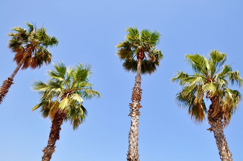 Barcelona Barcelona, Spain Palm Trees Palmen Urlaub Holidays Pattern Pieces Surf's Up