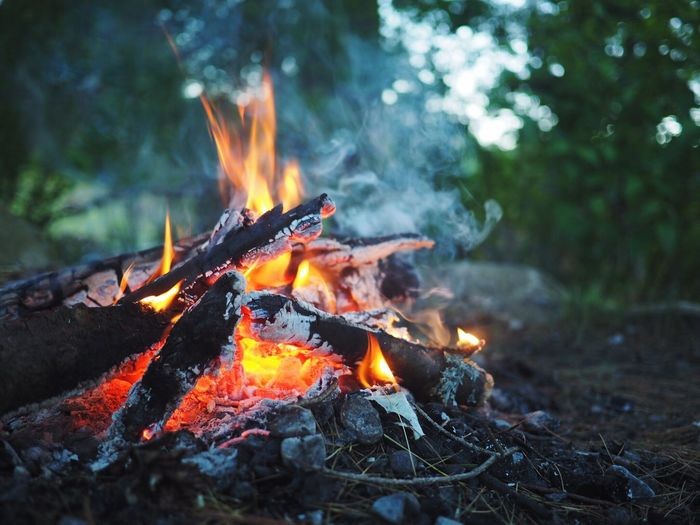 Flame Fire - Natural Phenomenon Heat - Temperature Burning No People Outdoors Close-up Day Campfire Camping Fire Pit Flame Wood Roasting Marshmallows Smoke The Great Outdoors
