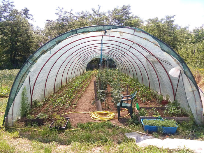 Organic greenhouse garden with paprika and tomatoes plants in the soil. Sustainable rural living. Agriculture EyeEm Nature Lover EyeEmNewHere Gardening Green Nature Plant Farming Food Greenhouse Grow Growing Plants Growth Healthy Eating Nature Organic Organic Food Organic Gardening Paprika Plantation Spring Sustainable Resources Tomato Vegetable Vegeterian