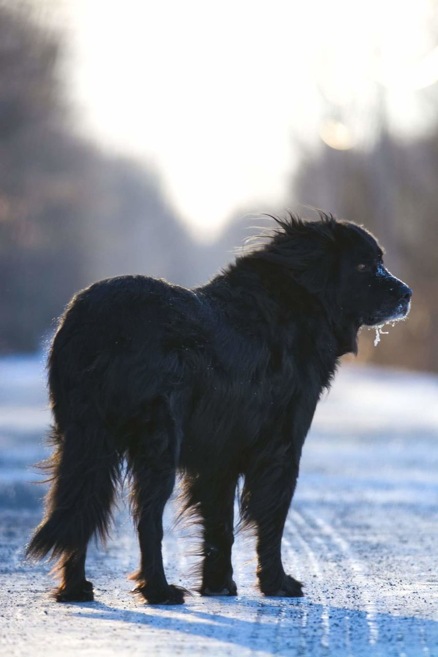 SIDE VIEW OF A DOG STANDING ON SNOW