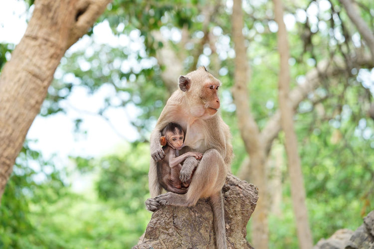 Monkey and it's baby in the forrest Animal Animal Family Animal Themes Animal Wildlife Animals In The Wild Branch Day Focus On Foreground Group Of Animals Low Angle View Mammal Monkey No People Plant Primate Sitting Tree Tree Trunk Trunk Vertebrate Young Animal