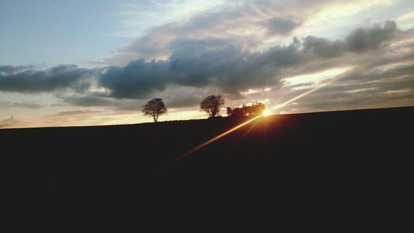 Tree Tree Area Rural Scene Sunset Agriculture Sunlight Storm Cloud Sun Field Road