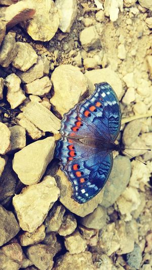 One of the butterflies that escaped my stomach Outdoors Nature Life Close-up Phone Camera Coulourful