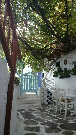 The Purist (no Edit, No Filter) Pure Nature Mykonos Throughmyeyes Traveling Travel Photography Vacation Natural Beauty From My Point Of View Beautiful Life Capturing Freedom Nice Atmosphere Enjoying The View Hello World Check This Out Mobilephotography In Front Of Me Flowerporn Urbanphotography Urban Lifestyle Relaxing Time Walking Around Discovering Thats Life