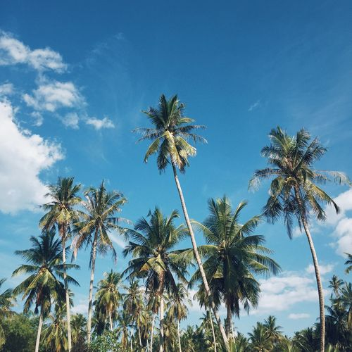 Summer Traveling Tranquil Scene Tranquility Travel Photographer Photooftheday Photography Photo Summer Coconut Trees Palm Tree Sky Tree Low Angle View Blue Growth Beauty In Nature No People Nature Outdoors Scenics