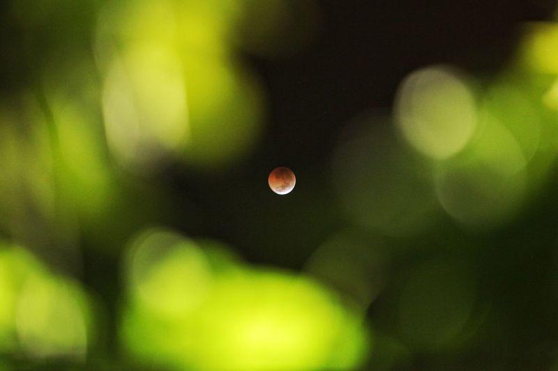 Micro Blood