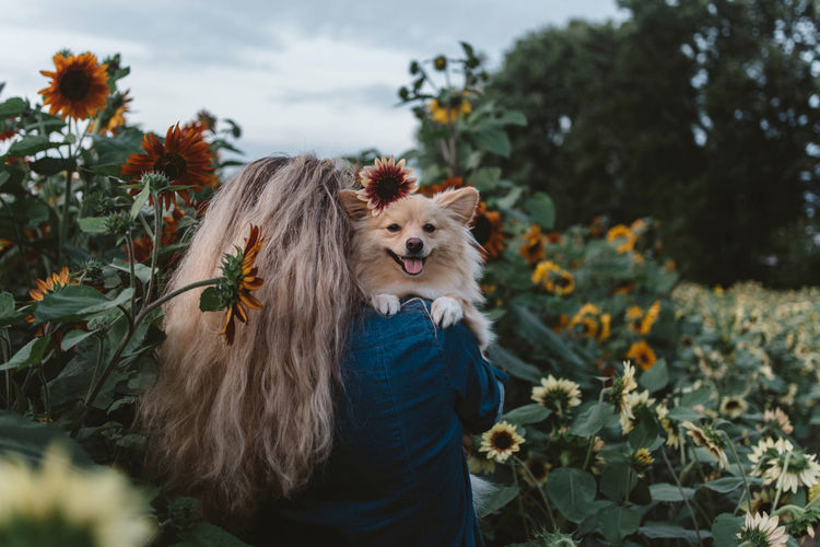 Dog amidst flowering plants against trees