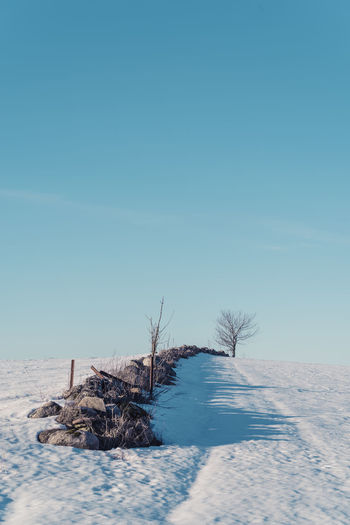 Johan's Tree. Bare Tree Beauty In Nature Blue Clear Sky Cold Temperature Day Landscape Nature No People Outdoors Scenics Sky Snow Tranquil Scene Tranquility Tree Winter