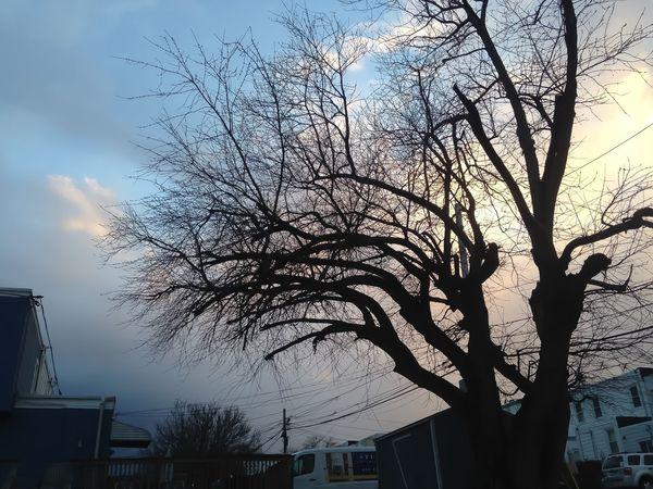Photographic Memory Neighborhood Tree Front Yard