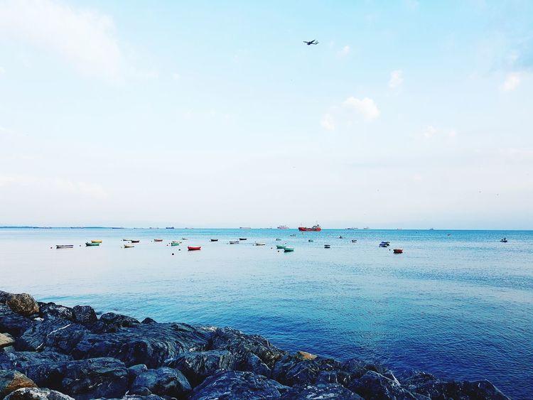 Bird Water Flying Sea Flamingo Beach Blue Flock Of Birds Silhouette Sky