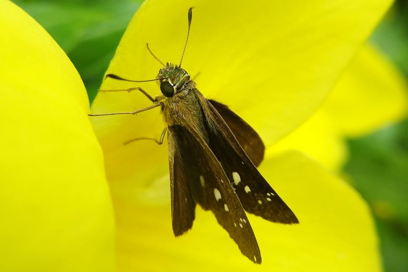 Close-up of insect on yellow leaf