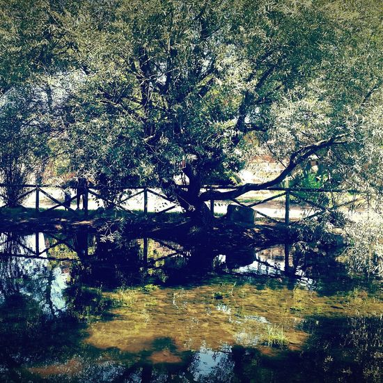No People Day Tree Water Outdoors Beauty In Nature Green Color Plant Nature Freshness Laghetto Parco Degli Acquedotti Albero The Great Outdoors - 2017 EyeEm Awards Summer Exploratorium