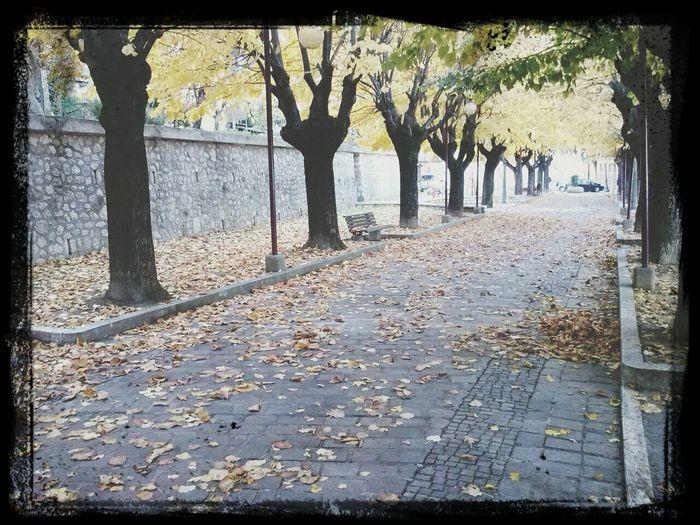 Autumn Colors Colours Of Autumn Autumn Trees Autumn Melancholy