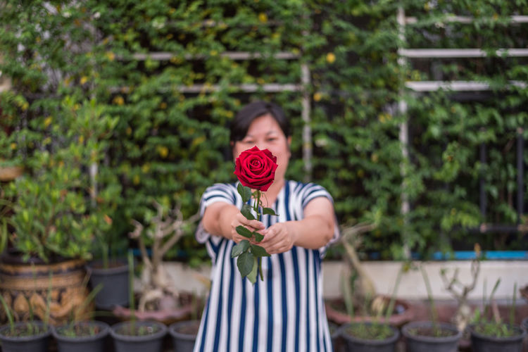 Mature woman holding red rose while standing at backyard