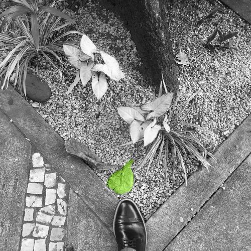 Chão de esperanças Human Leg Shoe Body Part Low Section Human Body Part One Person Real People Lifestyles Day Street