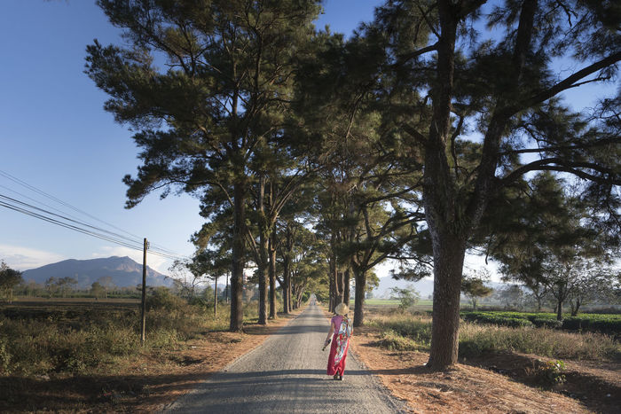 The road with two rows of pine trees which were planted nearly 100 years at Pleiku town in a morning. This is a favorite place for visitors to Pleiku, Vietnam Freedom Gia Lai Morning Pine Pleiku. Road Rural Travel Trees Two Rows Woman Beatiful Nature Enjoy Environment Favorite Forest Freshair Landscape Outdoors Rural Scene Summer Tourism Town Visitors Walking