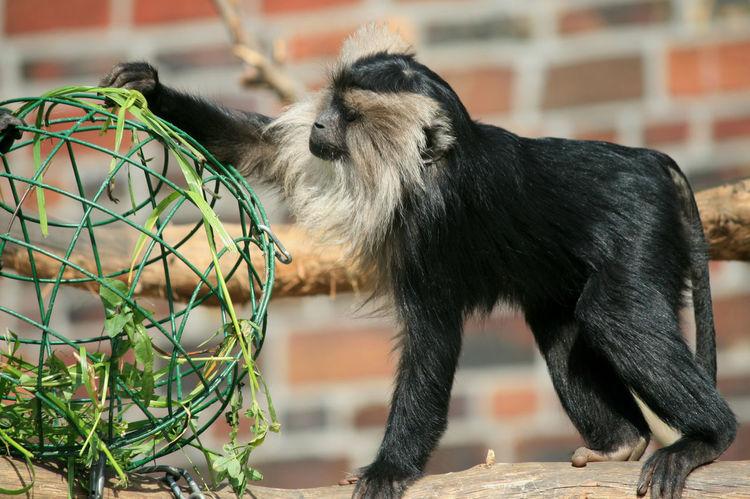 Guenon Zoo Zoo Animals  Zoo Leipzig