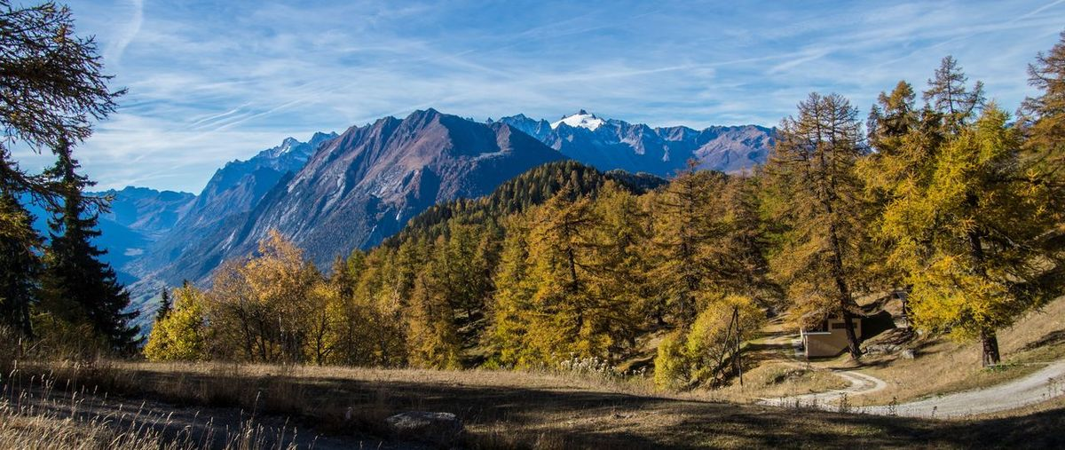 col of lien,valais,swiss Tree Mountain Plant Scenics - Nature Forest Mountain Range Landscape Nature Sky Environment Beauty In Nature Land No People Autumn Tranquil Scene Day Tranquility Pine Tree WoodLand Non-urban Scene Coniferous Tree Pine Woodland