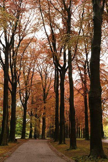 park Nature_
