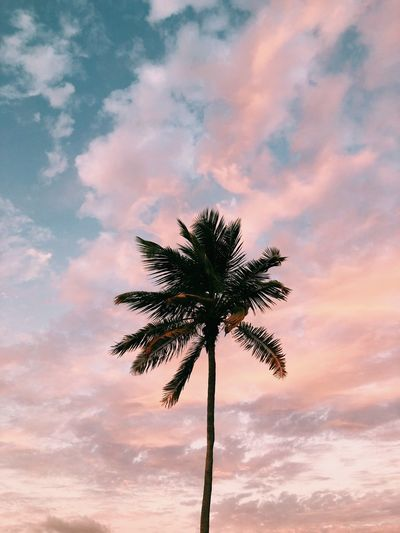 Low angle view of coconut palm tree against cloudy sky during sunset