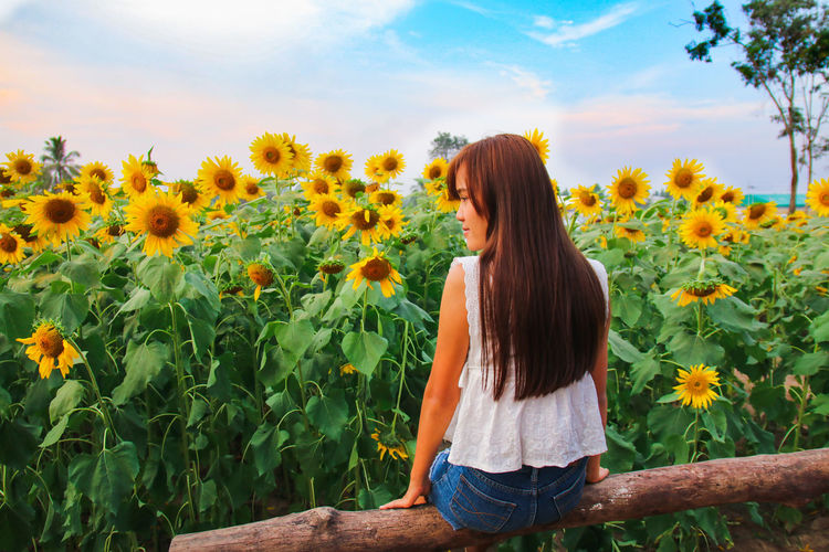 #summer Summer Exploratorium Human Back Young Women Back Rural Scene Women Flower Agriculture Standing Summer Rear View Sunflower Ear Of Wheat Agricultural Field