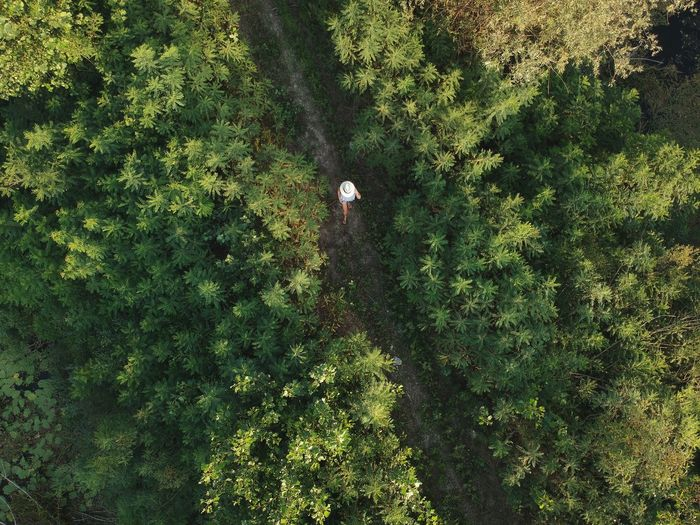 High Angle View Of Woman Amidst Trees In Forest