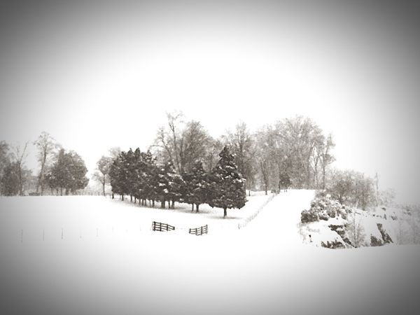 Snowstorm2016 Eyemnaturelover Mothernature Snow Trees Passenger Side View Beautiful Day Road Let It Snow Snowy Snowday Fence Passenger View Fortheloveofblackandwhite Blackandwhite EyeEm Nature Lover Nature_collection Landscapes With WhiteWall