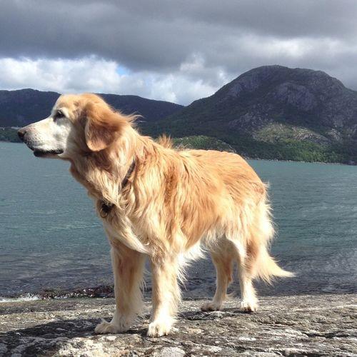 Dog Sky And Sea Nordic Light Heartbeat Moments