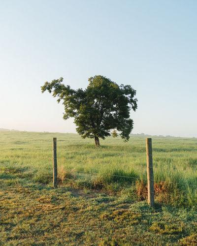 Tree Rural Scene Barbed Wire Field