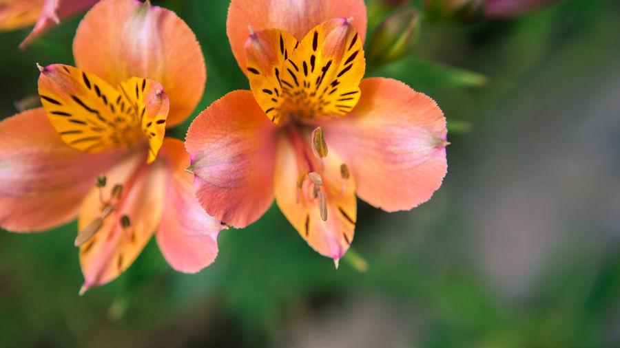 Dual Flowers
