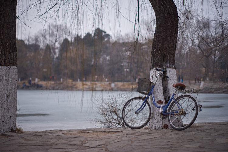 Bicycle by bare tree against city