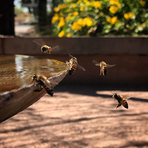 Close-up of bee flying over wood