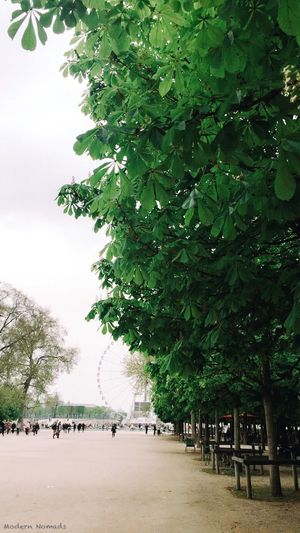 Some greenery for Earth Day 🌿✨ France Iphoneonly Vscophile VSCO Paris Je T Aime Paris Modern Nomads Naturelovers Nature Green Jardin Des Tuileries