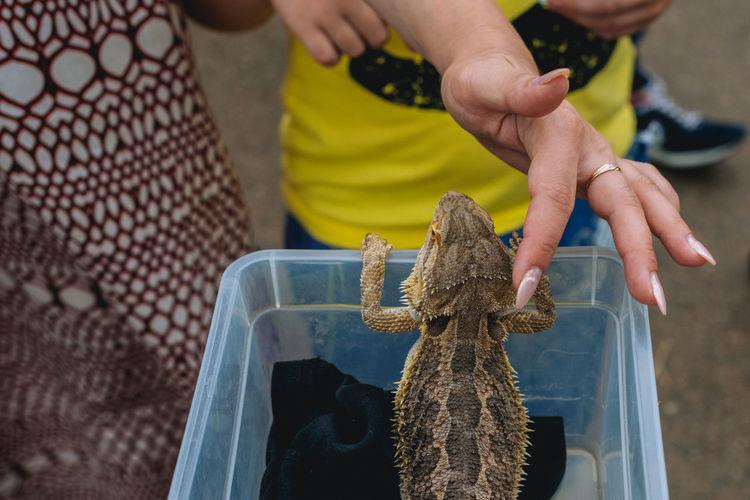 Close-up of a woman touching lizard