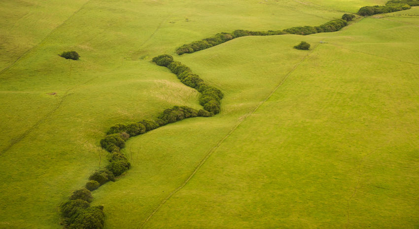 Aerial shot of lush green grass, with a meandering line of green trees running through the scene. Hawaii Lines Meandering United States Aerial View America Beauty In Nature Countryside Day Field Grass Green Color Hawaiian Landscape High Angle View Landscape Lines, Shapes And Curves Minimalism Nature No People Outdoors Rural Scene Scenics Tranquil Scene Tree