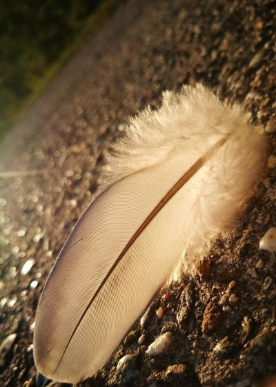 Feather  Feder