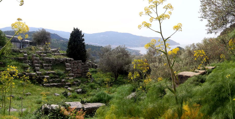Ambientazione Esterna Hills Mare Natura Sicily Alberi Beauty In Nature Collie Growth Italy Landscape Nature No People Outdoors Rovine Sea Tindari Tranquility Tree