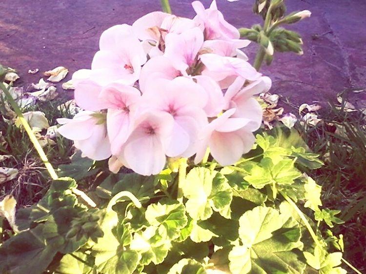 Lovely garden Flower Photography Gardenflowers Spring Lovely Weather