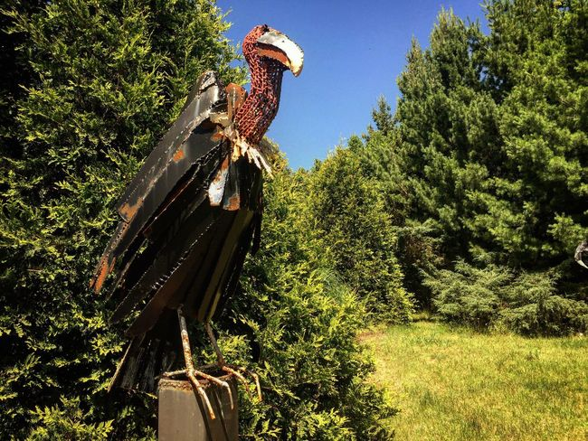 Bird Sculpture Sculptor Marcel Braitstein Tree Growth No People Day Nature Green Color Low Angle View Outdoors Scarecrow Plant Sky Clear Sky Beauty In Nature