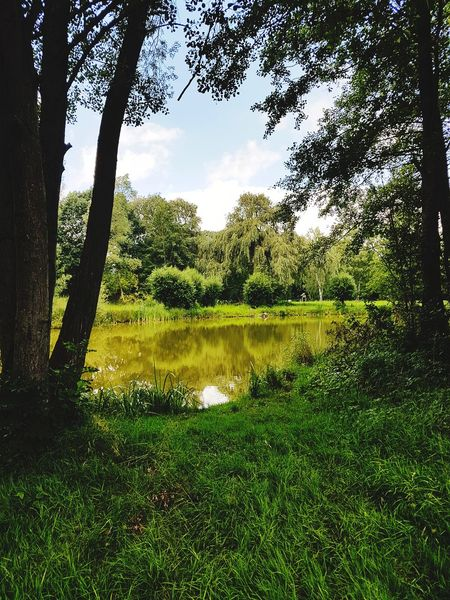 Tree Grass Green Color Nature Water No People Outdoors Day Growth Beauty In Nature Sky Riverside River Cloud - Sky Scenery Scenic Landscapes Scenic Nature Lake Tree Reflection Scenics Riverscape