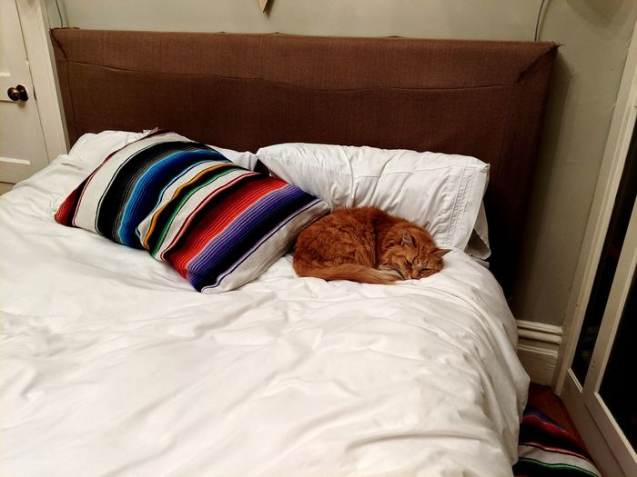 Deadly flurken. Cat Bedroom Pillow Bed Neat Multi Colored Home Interior Domestic Life