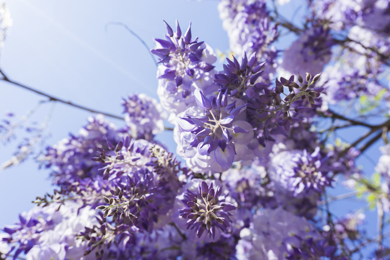 flower, purple, fragility, nature, beauty in nature, growth, blossom, petal, selective focus, freshness, no people, low angle view, day, springtime, close-up, plant, outdoors, branch, one animal, tree, flower head, blooming, lilac, animal themes