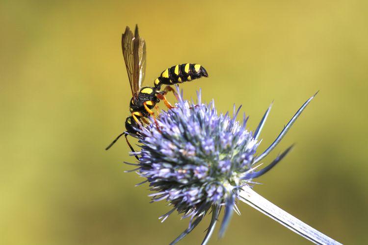 #Little Bee