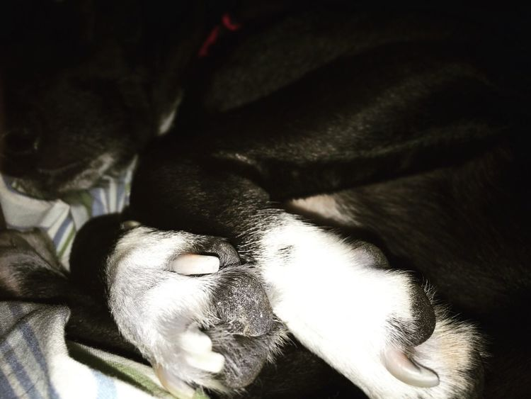 Puppy Sleeping Dog Sleeepyhead Dogpaws Blackandwhite Sweetdogofmine Quiet Life Happy Place♥